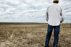 Photo shows a man with his back to the camera looking out across a brown field, Canada's top ten weather stories 2017 by David Phillips