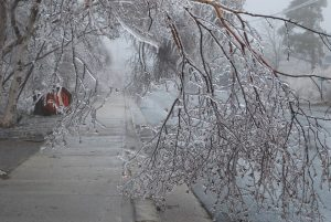 Photo shows ice laden branches of a tree, Canada's top ten weather stories 2017 by David Phillips