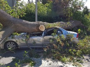 Photo shows a car crushed underneath a tree for article Catastrophes and the insurance industry