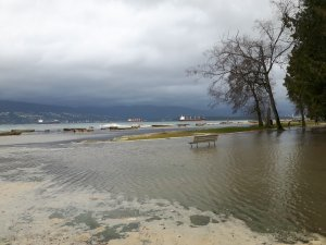 cloudy sky, trees, and storm surge laid shore